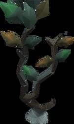 Seeping elm tree