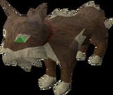 Meiyerditch cat