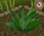 GreenHerb5