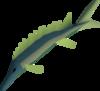 Leaping sturgeon detail