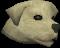 Labrador (white) chathead