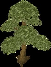 Yew tree (Historical)