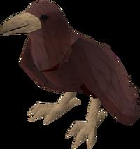 Raven (red) pet