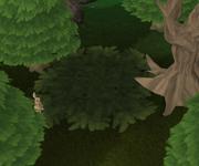 Leaf trap