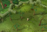 Herblore habitat hint2