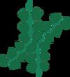 Edible seaweed detail
