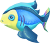 Rainbow fish (Aquarium)