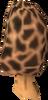 Morchella mushroom detail
