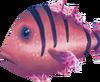 Cavefish (Aquarium)