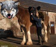 Werewolf clydesdale