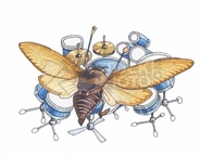 Moth drumming