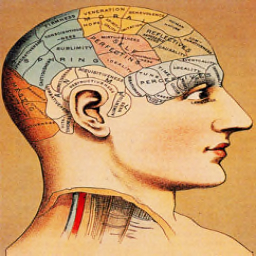 File:Phrenology.jpg
