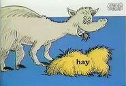 Hungry horse eats hay