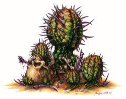 Porcupine Cactus.jpg
