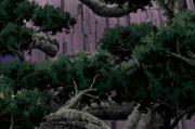 300px-Birth Of Dense Woodland