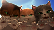 PIBTTD Angry Cats
