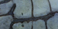 The Three Blind Mice