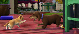 TS3Pets dog and cat fight