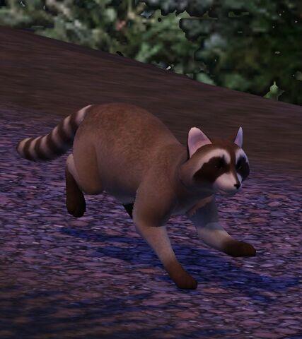 File:Raccoon1.jpg