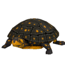 File:Spotted Turtle.png