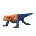 File:Agama Lizard.png