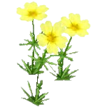 File:Wildflower Sulfur.png