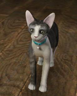 Alistair Elmore cat