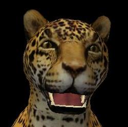 Jaguar headshot