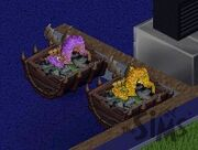 TS1 dragons hatching