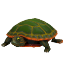 File:Western Painted Turtle.png