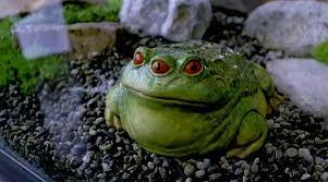 File:Tibetan Three-Eyed Toad.jpg