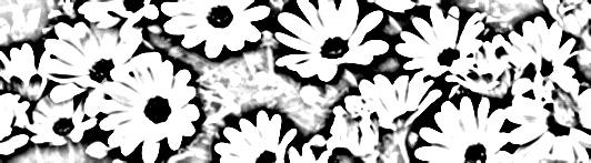File:Daisies-1.jpg