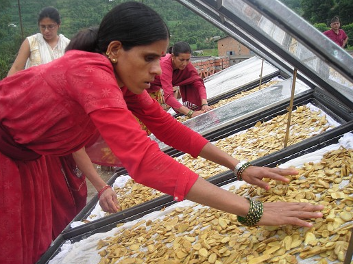 File:Solar drying of ginger, Center for Rural Technology, Nepal, 2-1-16.png