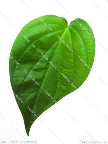 File:Betel leaf.jpg