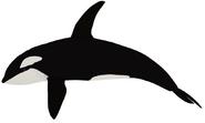Orca generations model