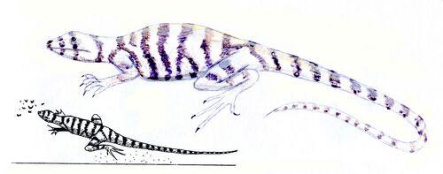Zebra striped lizard 2
