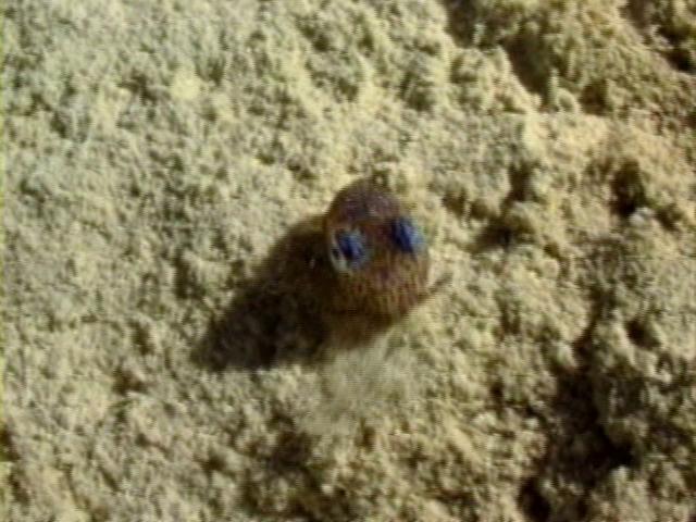 File:Case of the Sponge Bob 109.png