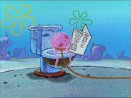 1 Jellyfish On 1 Toilet