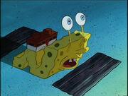 SpongeSnail