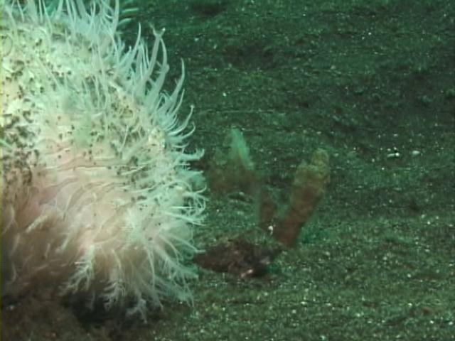 File:Case of the Sponge Bob 126.png