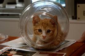 File:Cat in a jar.jpg