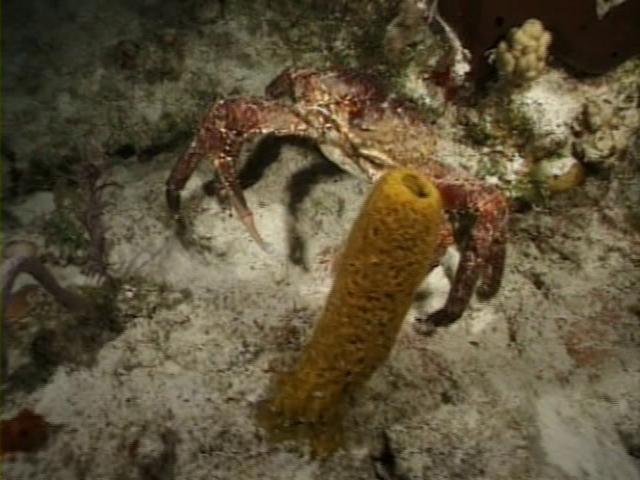 File:Case of the Sponge Bob 085.png