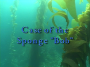Case of the Sponge Bob 002