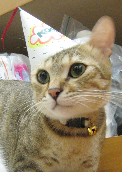 Free Angry Cats In Birthday Hats