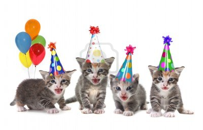 File:Party hat kittens1.jpg