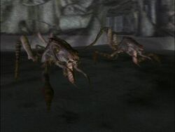 ArachnidRoyalGuard