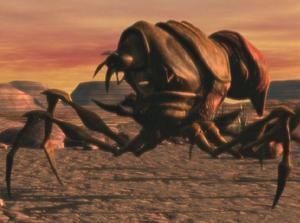 Blister Bug on Tophet