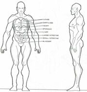 Homo eridani physiology