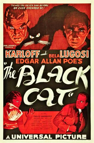 File:The black cat.jpg