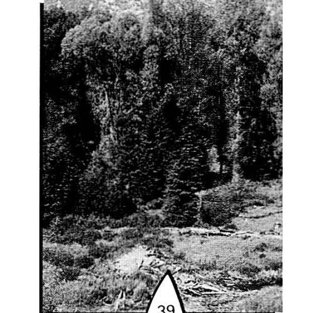 File:Albireo surface.jpg